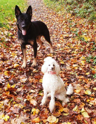 Hundesalon New Jersey (1)