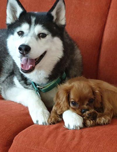 Hundesalon New Jersey (2)