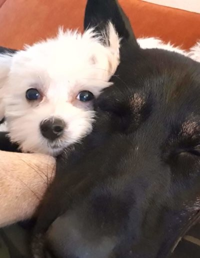 Hundesalon New Jersey (3)