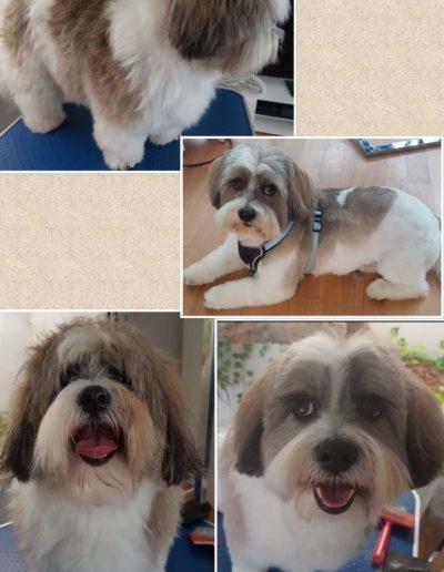 Hundesalon New Jersey - Vorher Nachher (11)