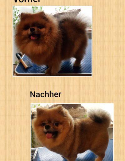 Hundesalon New Jersey - Vorher Nachher (16)